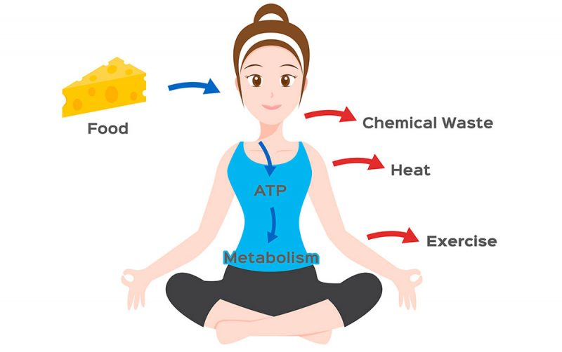 Yoga Can Rev The Metabolism